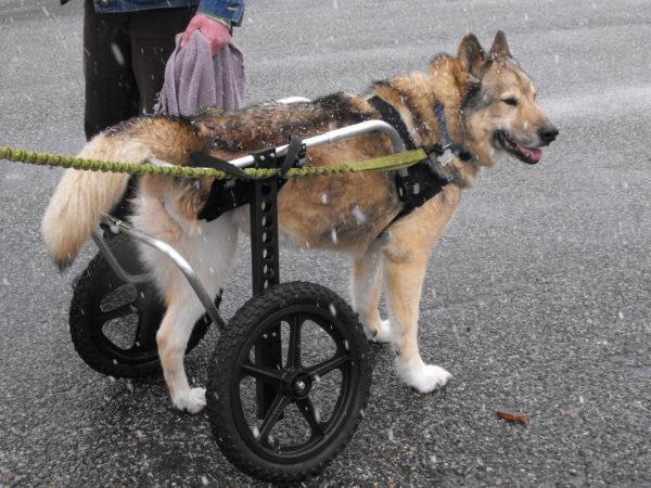 Large Dog Wheelchairs