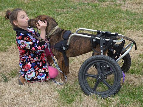 dog wheelchair, wheelchair for back legs, handicapped pets