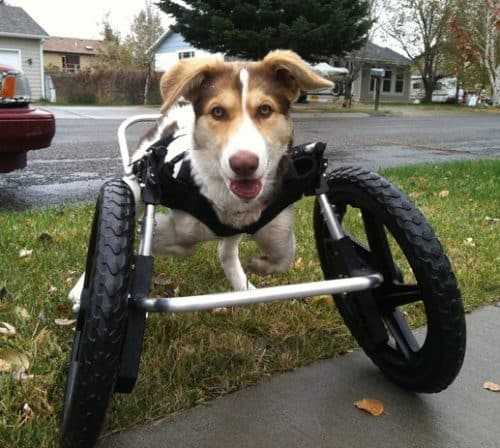 Front Support Dog Wheelchair   Ruff Rollin'