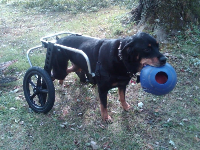 Extra Large Dog Wheelchair