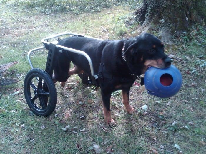 Extra Large Dog Cart