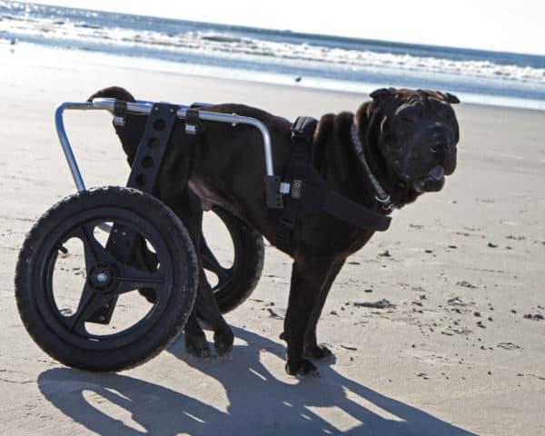 Large Dog Wheelchair