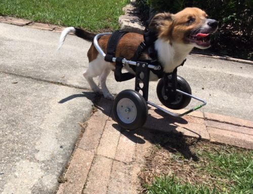 Fenway – Papillon In Front Support Wheelchair