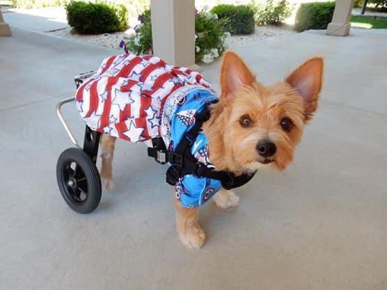 Small Dog Wheelchair