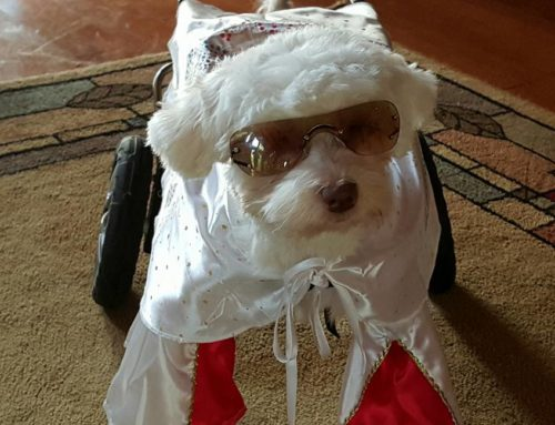 Noah – Rear Support Dog Wheelchair