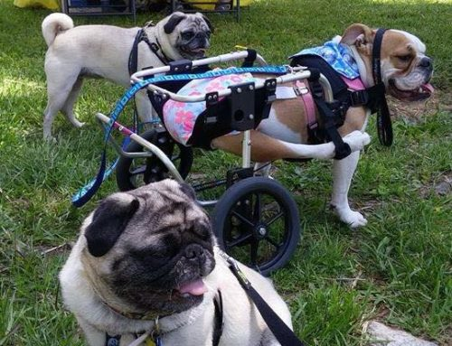 Twinkles – Rear Support Dog Wheelchair