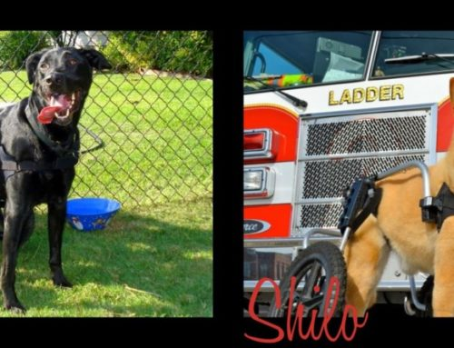 In Loving Memory Of Fio And Shilo, A Story Of Inspiration And Will