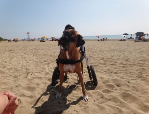 Jasmin – Rear Support Dog Wheelchair