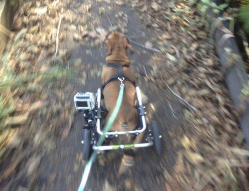 Donner – Rear Support Dog Wheelchair