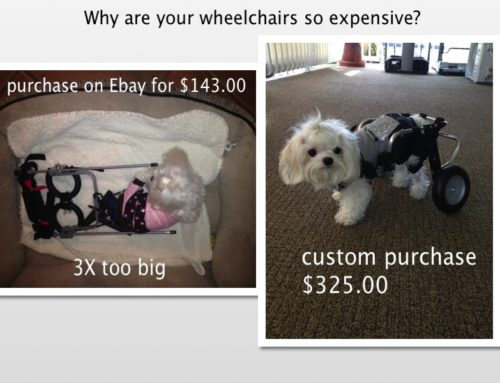 Less Costs More-Purchasing A Dog Wheelchair Online