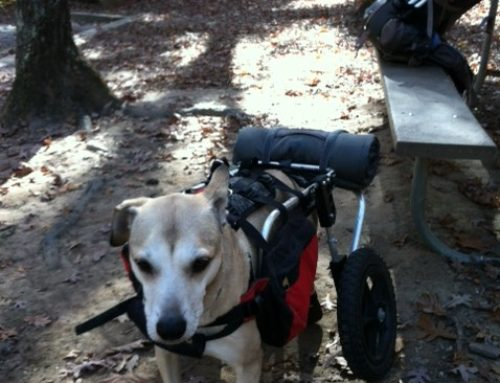 Ryno – Rear Support Dog Wheelchair