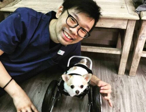 Bb – Front Support Dog Wheelchair