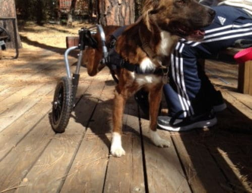 Hobbes – Rear Support Dog Wheelchair