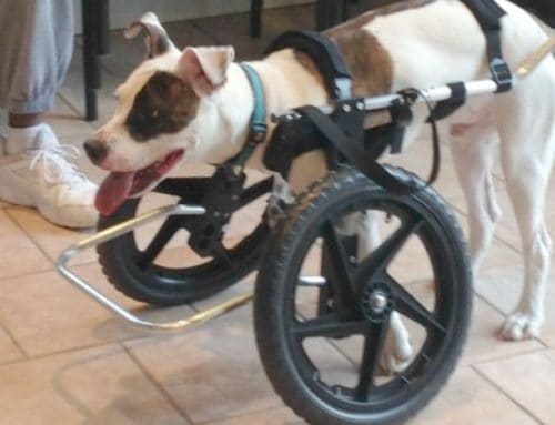 Tres – Front Support Dog Wheelchair